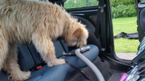 Veel meer dan een puppycursus: pup onderzoekt auto in Heerde