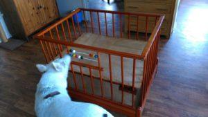 Individuele sessies: hond en baby, voorbereidingen treffen en het begeleiden van een fijne onderlinge relatie